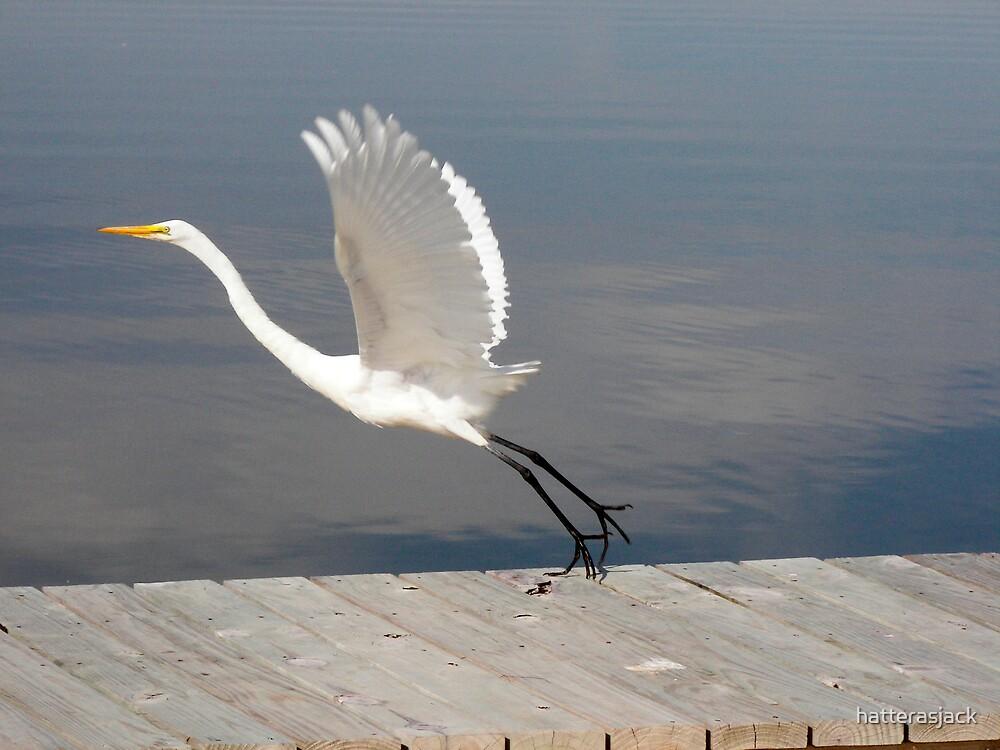 Taking Flight by hatterasjack