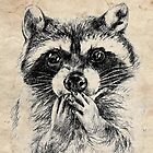 Surprised raccoon by AnnaShell