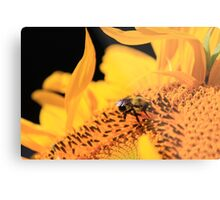 Bumble Bee Flower Metal Print
