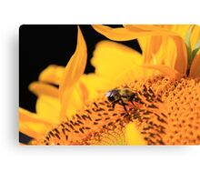 Bumble Bee Flower Canvas Print