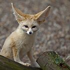 So I&#x27;m a little small for my Ears......... by Krys Bailey
