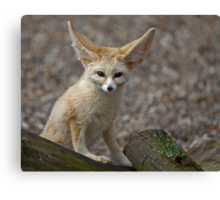So I'm a little small for my Ears......... Canvas Print
