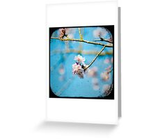 pink on blue Greeting Card
