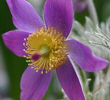 Purple and Yellow by Martina Fagan