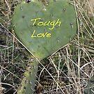 Tough Love by Alice Kahn