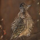 Greater Roadrunner by Barbara Manis