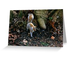 Little Squirrel Greeting Card