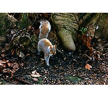 Little Squirrel Photographic Print