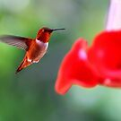 Hummingbirds Drink Nectar for Strength – Samuel 17:1-51 by Laurie Puglia