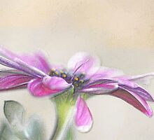 Pastel Daisy by Darlene Lankford Honeycutt