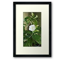 indoor flowers Framed Print