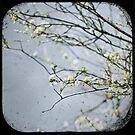 ~white on grey 1~ by eyeshoot