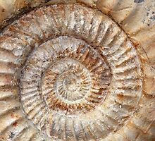 Ammonite by Zosimus