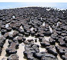 Stromatolites, Hamelin Pool, Western Australia by KAET Art