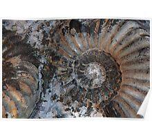 Ammonites Poster