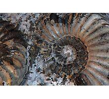 Ammonites Photographic Print