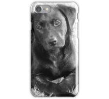 India Puppy iPhone Case/Skin