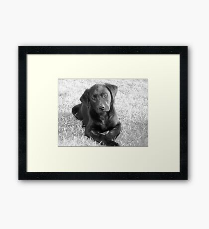 India Puppy Framed Print