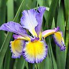Flowers by Teresa Zieba