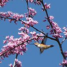 Spring Buzz by Visual   Inspirations