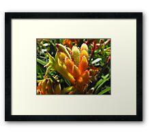 Fury Flower Framed Print