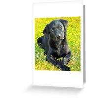 India Puppy 2 Greeting Card