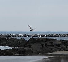 Seagull In Flight by Jessica Adams