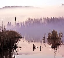 Misty Morning on the Lake by John Poon