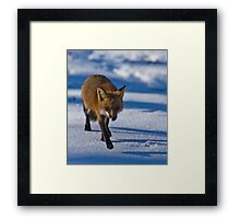 Yeah, Another Fox Framed Print