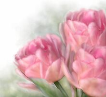 Angelique Tulips by Renee Dawson