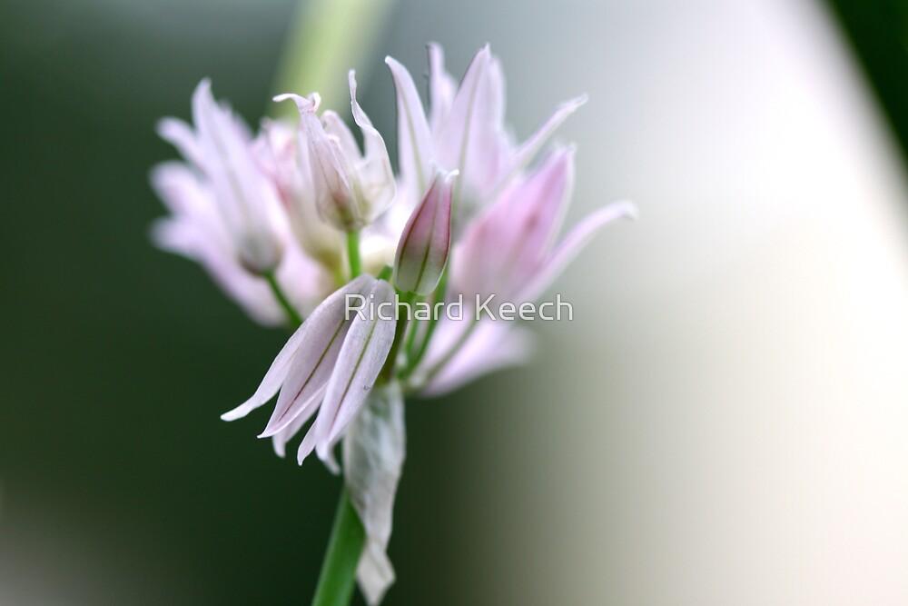 Chive Flower by Richard Keech