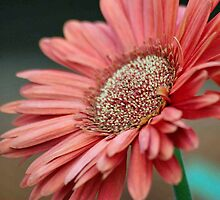 GERBERA IN PINK by Magriet Meintjes