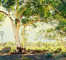 River Gums, Flinders Ranges, South Australia by Michael Boniwell