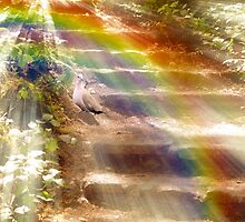 Going Into The Light! by Diane Schuster