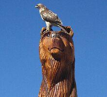 Hawk on Bear Statue  by nokomis