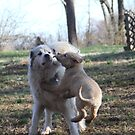 Udens & Goliath Playtime by goldnzrule