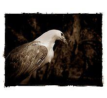 Eagle Landscape by Shannon Benson