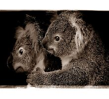 Koala Mother and Joey by Shannon Benson