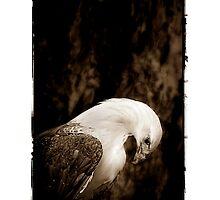 Eagle Portrait by Shannon Benson