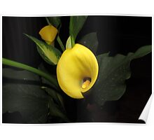 Yellow Calla Lily Flower Poster