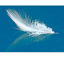 Floating Duck Feather Photographic Print