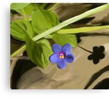 Sign of Spring Canvas Print