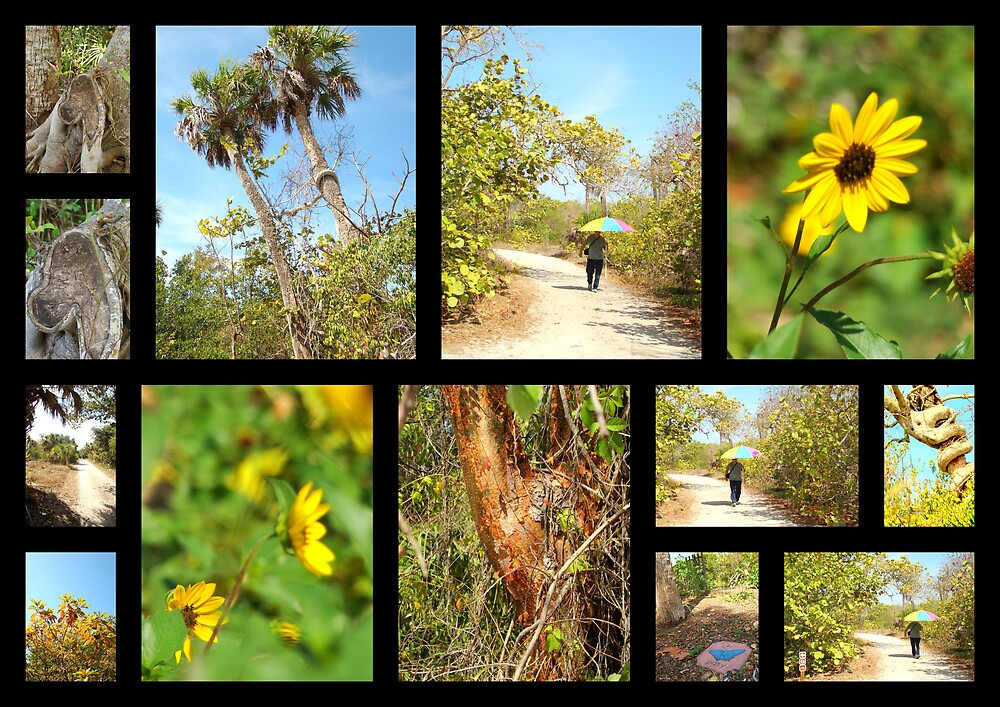 Black Island Nature Trail ( @ Lovers key State park )  by Isa Rodriguez