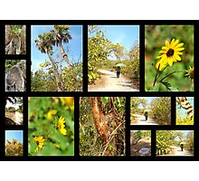 Black Island Nature Trail ( @ Lovers key State park )  Photographic Print