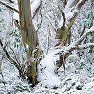 Snow Gum by Ern Mainka