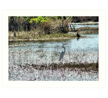 Egret @ Florida Everglades  Art Print