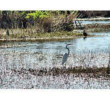 Egret @ Florida Everglades  Photographic Print