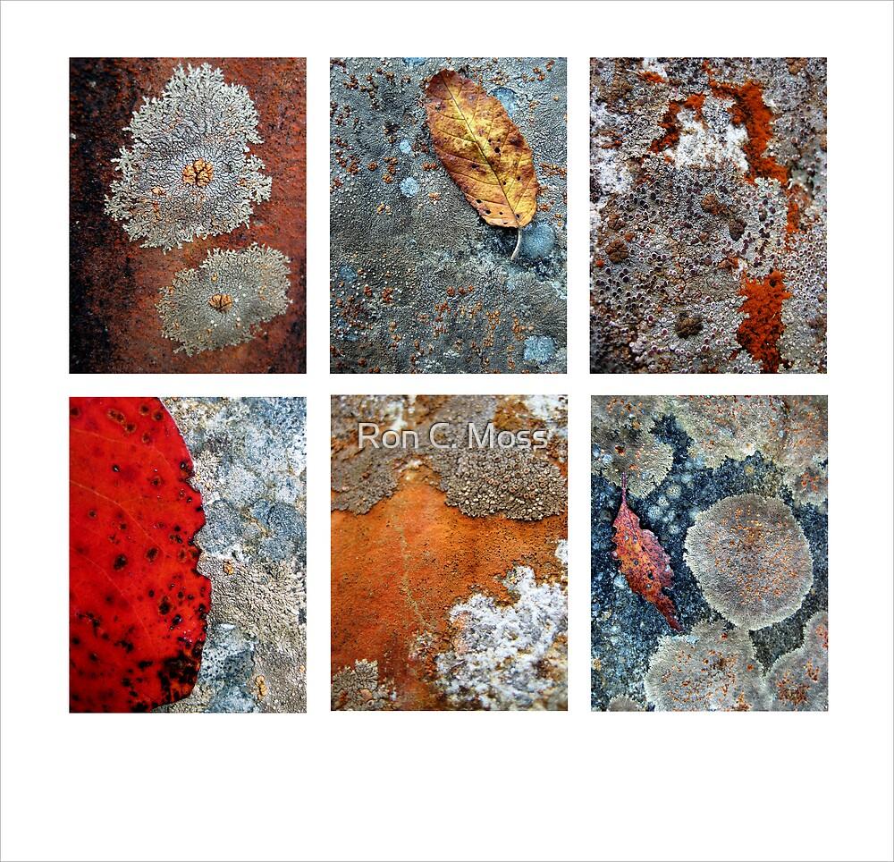 River Rock Lichen by Ron C. Moss
