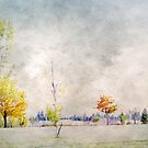 A Touch of Colour in Twizel by coffeebean