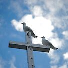 Lofty Perches by Sandra Fortier
